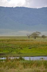 Ngorongoro Crater Natl. Park