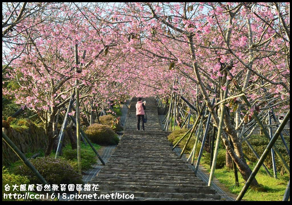 台大鳳凰自然教育園區櫻花DSC_5896