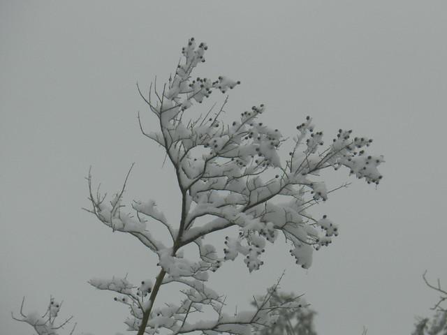 natureworldDSCN1754