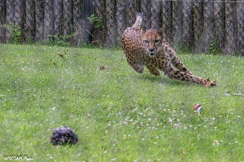 Cincinnati Zoo 7-9-16-0616