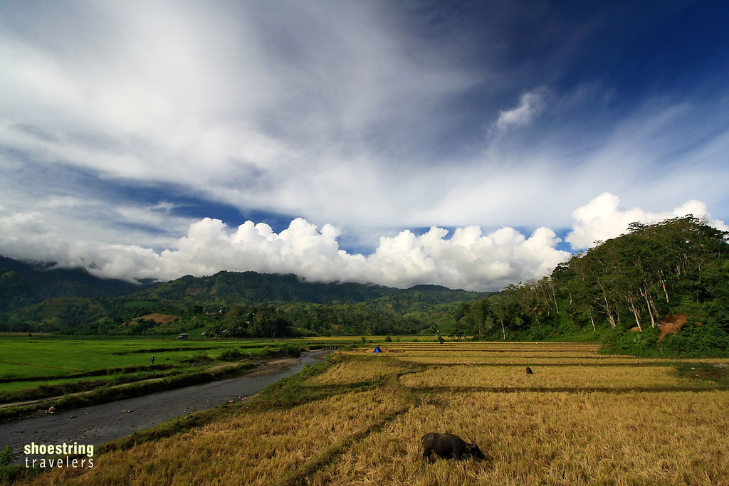 view of rice fields on the road to T'daan Kini Falls