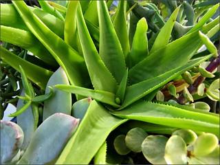 Succulent dish garden 1