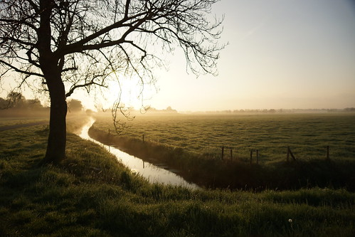 trees nature water netherlands rural sunrise landscape vanishingpoint nederland
