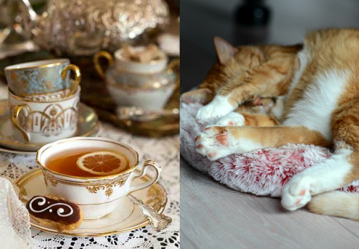 Collage The Flu, Twinkle,Tea time Red cat