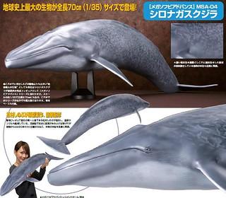 海洋堂 1/35 巨大軟膠系列 藍鯨
