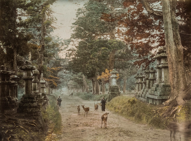 Kasuga-taisha shrine in Nara (hand-colored albumen print, Japan)