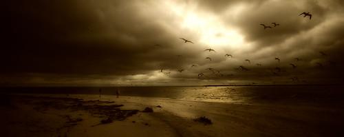 ocean seagulls bird beach water birds clouds landscape golden gulls gulfcoast bocagrandefl