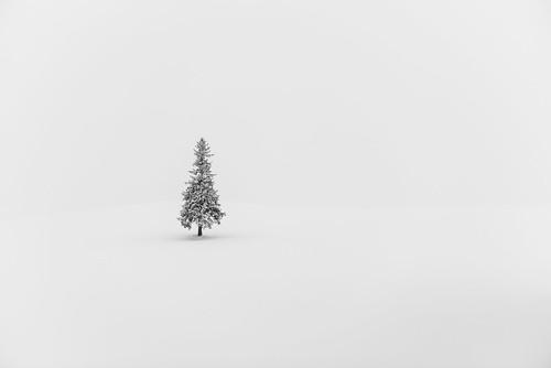 winter white snow tree japan landscape hokkaido christmastree 北海道 lonely minimalism biei 雪 冬 クリスマスツリー hokkaidō kamikawagun arcreyes