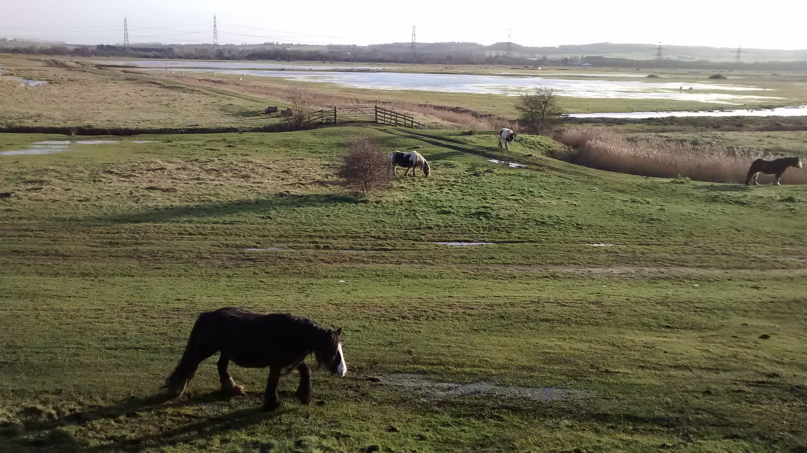 Wetlands Horses and wetland betwixt Cliffe and Gravesend