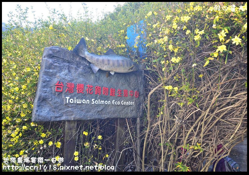 武陵農場賞櫻一日遊DSC_5472