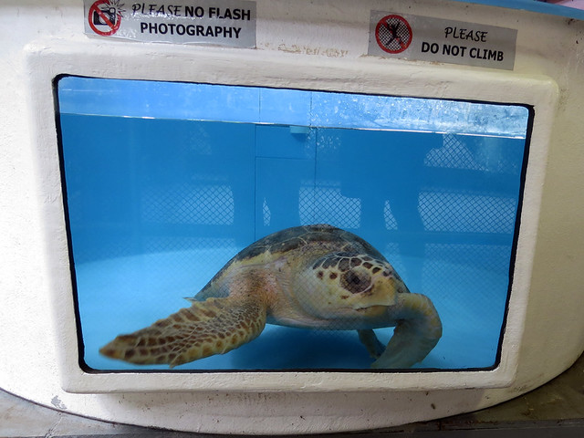 Gumbo Limbo turtle rehab