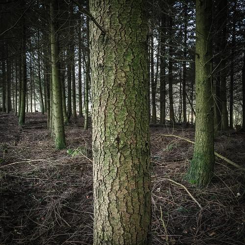 tree forest photography se skåne sweden deep f22 uncropped iphone 2015 skånelän blentarp iphonephoto ¹⁄₃₀sek iphone6 iphone6backcamera415mmf22 sjöbos 514022015142323