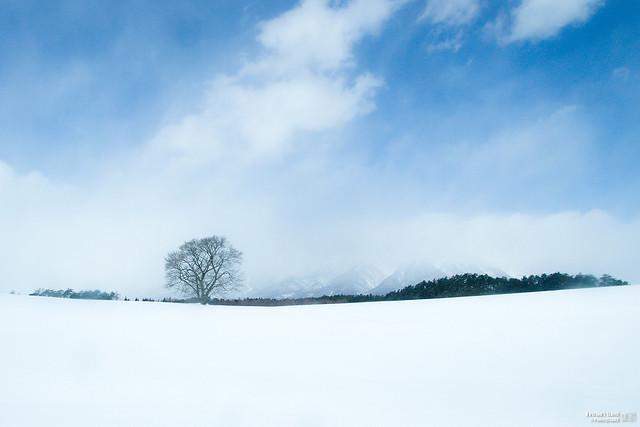 一本櫻 │ 岩手山
