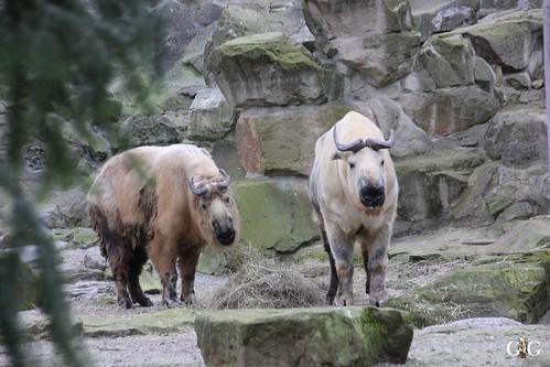 Berliner Zoo 22.02.20156