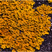 Lichen by MarkColman