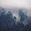 fog_in_the_woods
