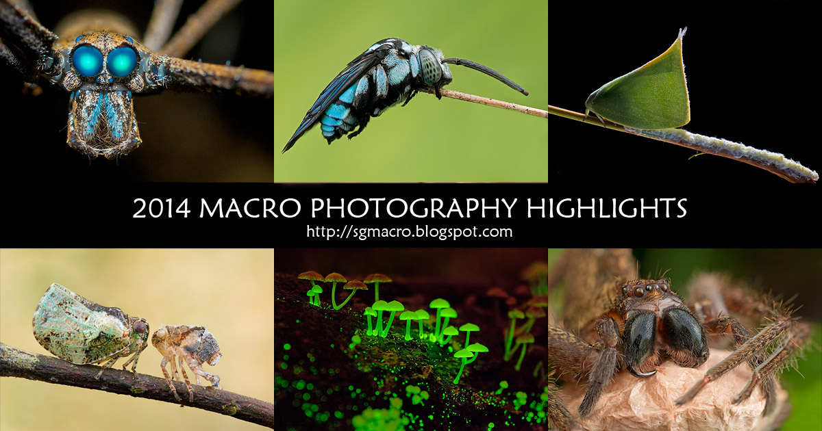 2014 Macro Photography Highlights