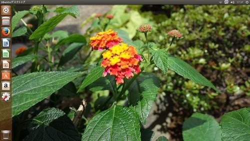Ubuntu Linux_SS_(2014_07_31)_1 Ubuntu Linux PCのデスクトップ スクリーンショット画像。ランタナの花の写真が背景画像になっている。
