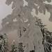 Small photo of Luminen oksa