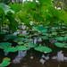 Hydrophytes | Mathieu IMBERT | reecif.com