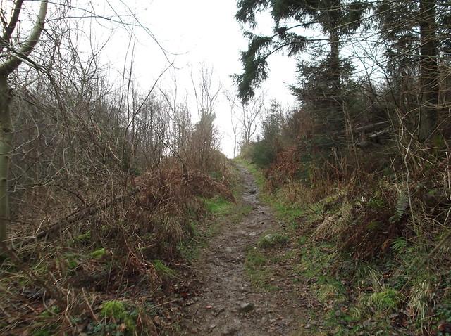 breidden hill 015
