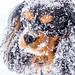 Snowdog by Cut2Run
