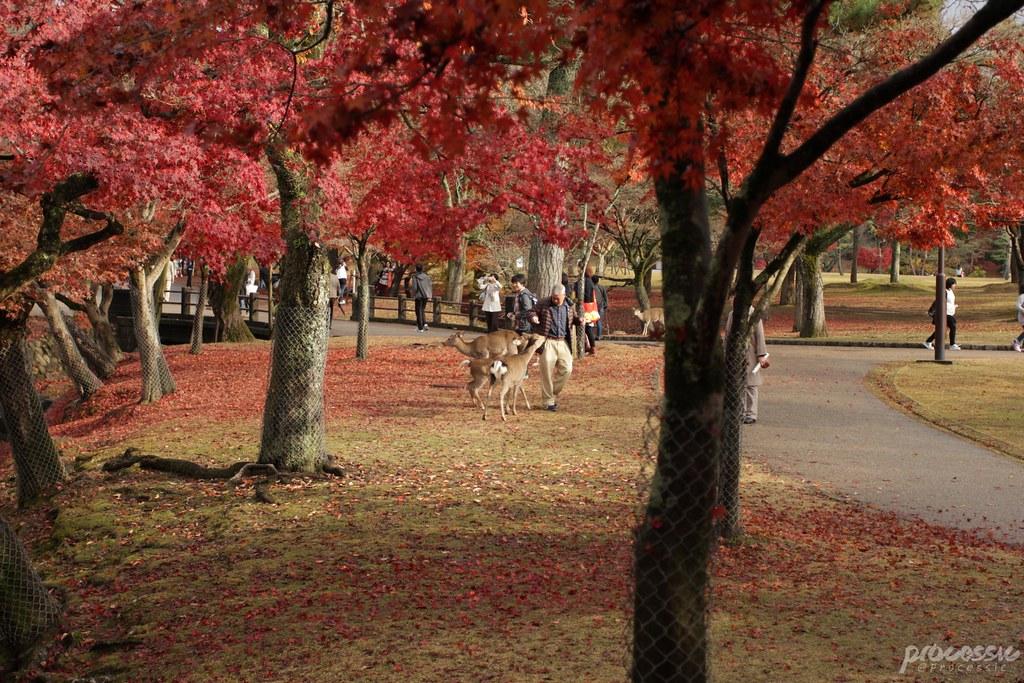 Nara_0045