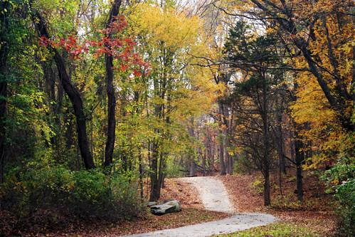 road autumn autumnfoliage trees fall nature colors leaves log colorful path fallcolors autumncolors fallfoliage rhodeisland lincolnri colorfulleaves lincolnwoodsstatepark