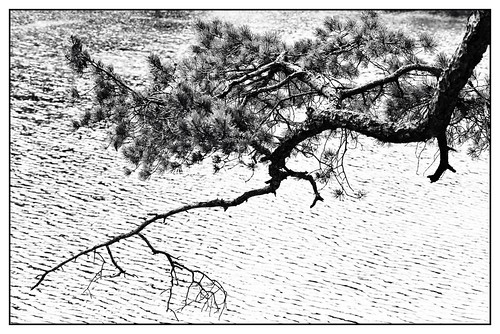 winter blackandwhite forest landscape austria natur holz landschaft bäume steiermark styria nativecountry hochsteiermark
