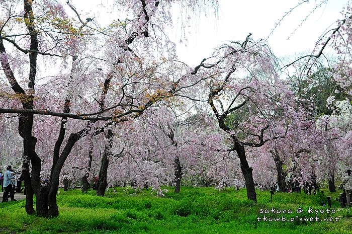 京都府立植物園 (4).jpg