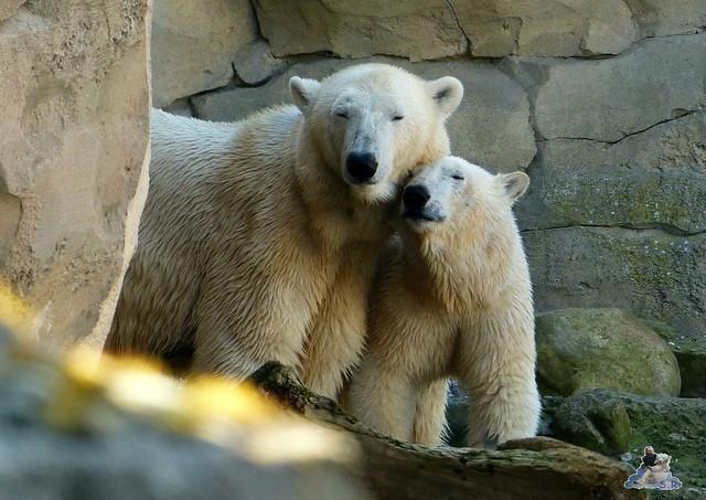 Zoo am Meer 08.03.2015  208