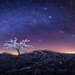 Iced Tree by Aurélien BERNARD
