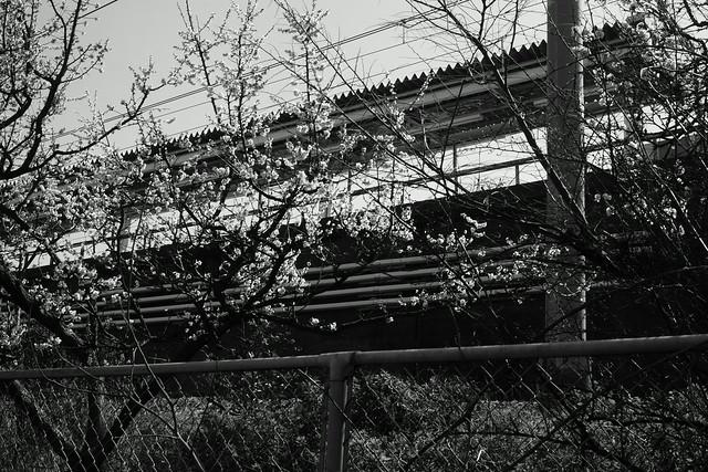 常磐線沿い、三河島 - Mikawashima Tokyo, 17 Mar 2015. 095