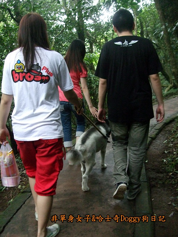 哈士奇Doggy2012陽明山二子坪15