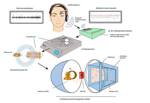 Mind-controlled transgene expression by a wireless-powered optogenetic designer cell implant. Nature Communications, online publication 11 November 2014