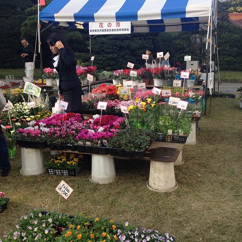 Yoyogi Park -- lots of booths selling flowers on Culture Day