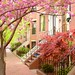 Springtime in Boston's Southend by brooksbos