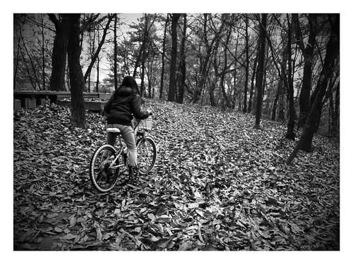 겨울 낙엽길