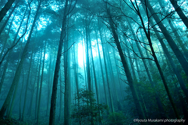 misty_forest6