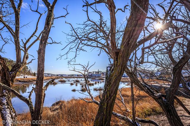 Wellfleet Through the Trees