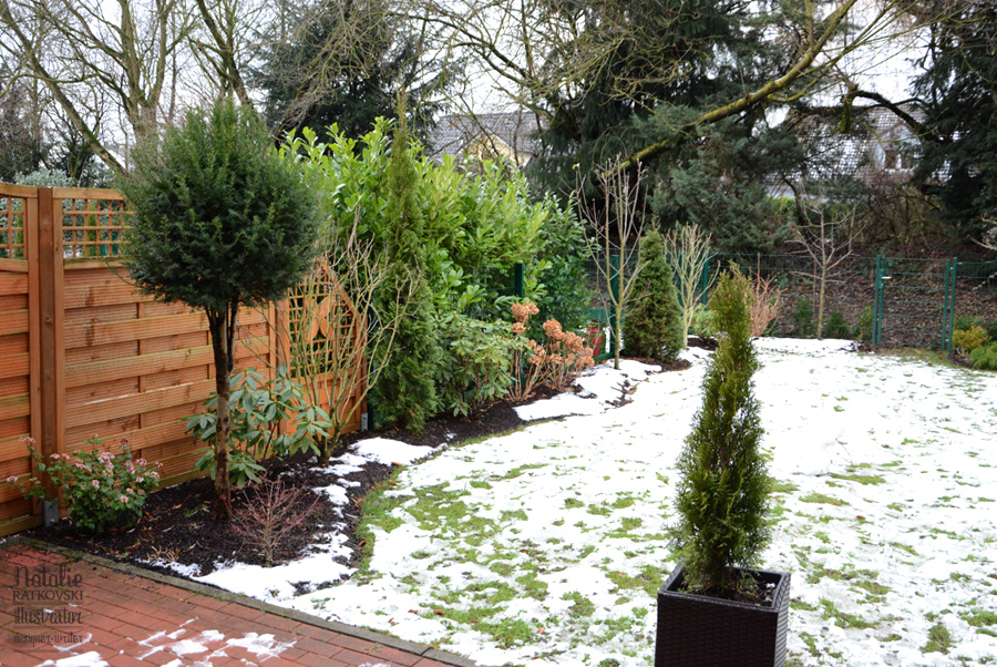 My garden in winter