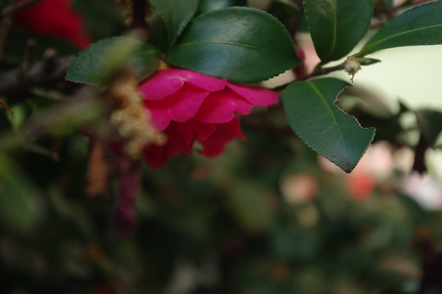 406 - wisteria2-kozo