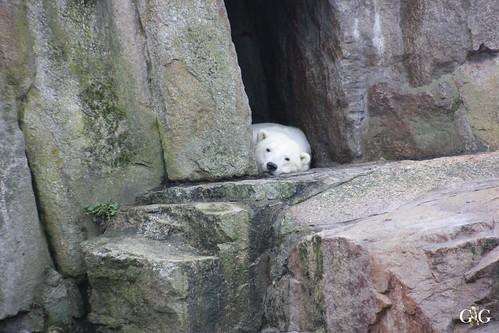 Zoo Berlin 11.01.2015 19