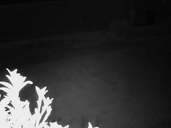 Record by Motion Detection E-mail[Image], 2015-03-02 18:44:21