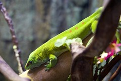 爬蟲, Reptile