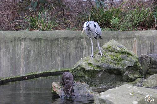 Zoo Berlin 11.01.2015 28