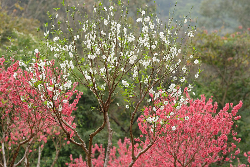 Mountain flowers are luxuriantly blooming