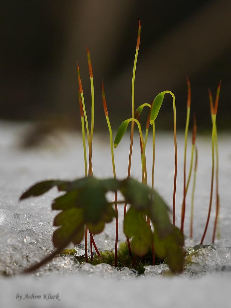 flickr photos tagged natursteinmauer | picssr