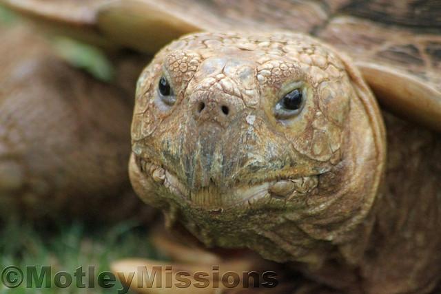 tortoise face
