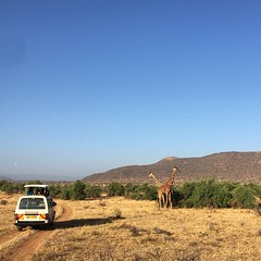 These guys were pretty beautiful. #safari #africa #kenya